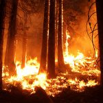 How VR helps train teams to battle wildfires