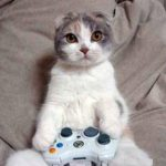 Game developers with a passion for cats are being invited to take part in a Game Jam this Autumn.