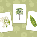 Memory Game Teaches Kids, Adults About Philippine Native Trees